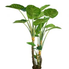 Kunstig colocasia grønn H235cm u/potte