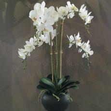 Kunstig orchide plante hvit m/sort potte H67cm