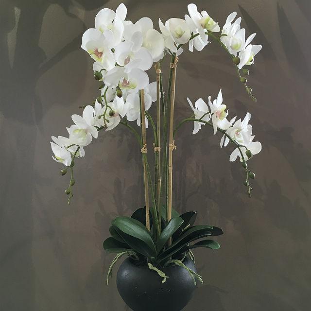 16924_orchide_pottet1