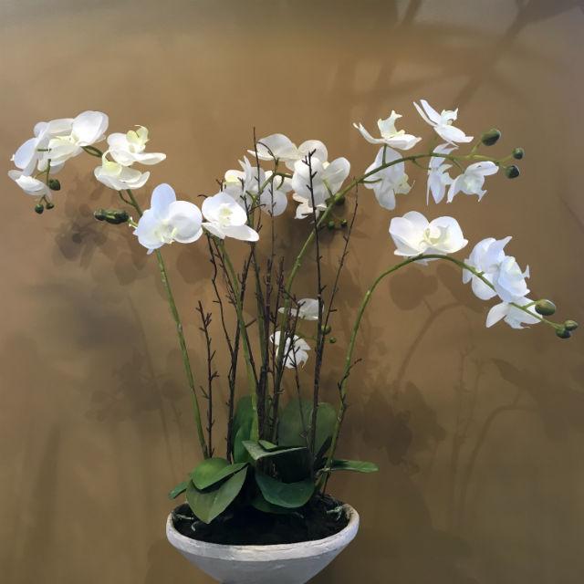 16952_orchide_fat1
