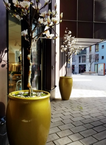 Magnoliatrær i gullpotter på A.C.E Fashionstore Oslo.