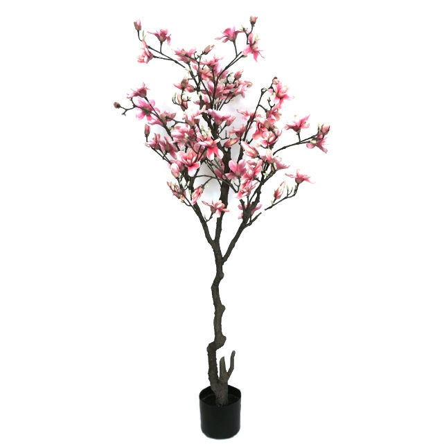 16749_magnoliatre_cerise210_1