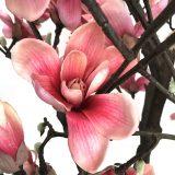 Kunstig magnoliatre cerise H210cm