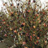 Kunstig gren medlar m/epler brun 121cm *SALG