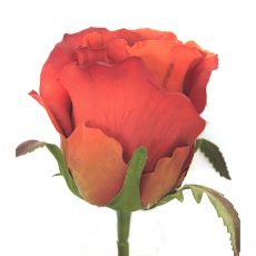 Kunstig rose fire orange 45cm *SALG