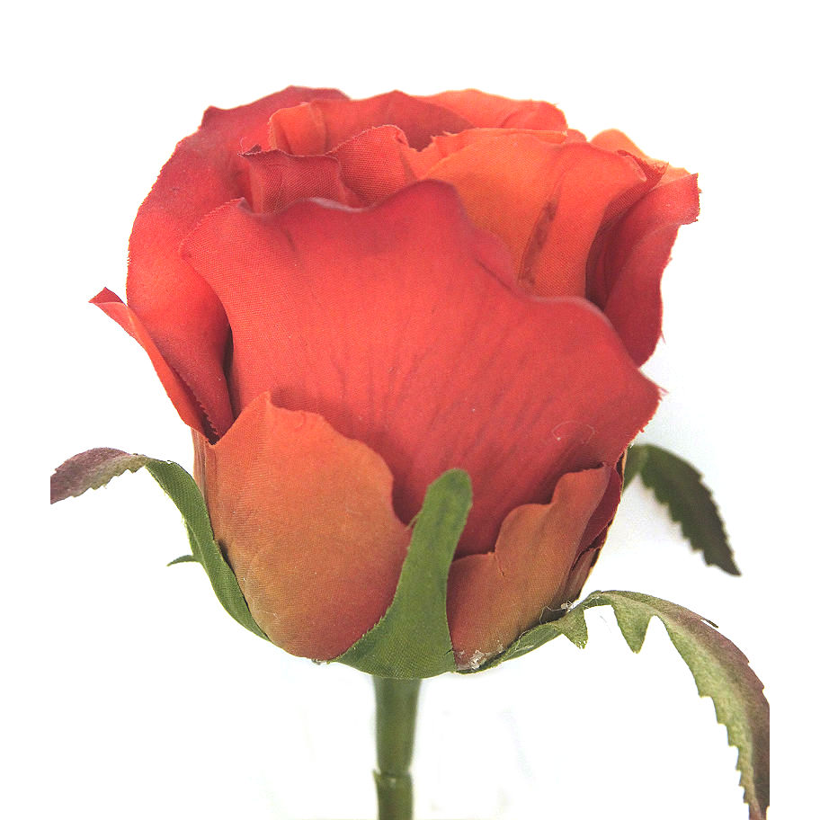 15842_rose_orange1NY2