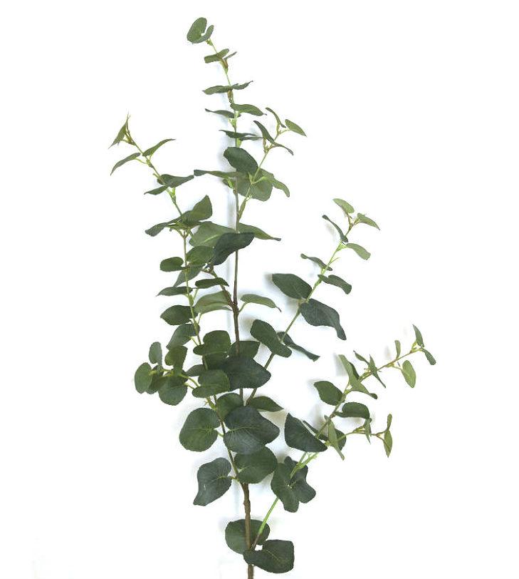 15994_eucalyptusbladgren2NY2