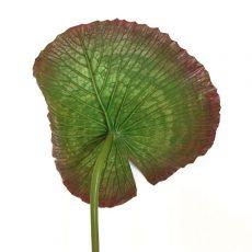Kunstig vannlilje blad 75cm *SALG
