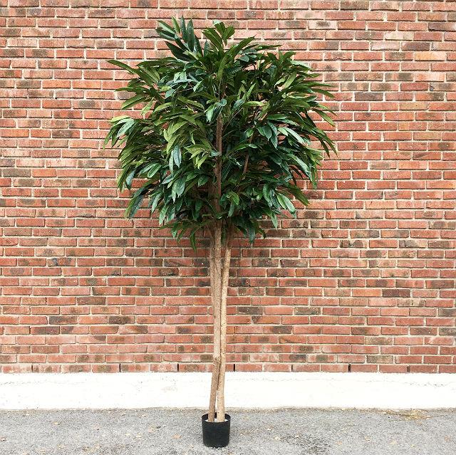16189_bambusfikus270cm1