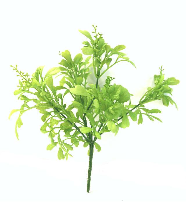16197_plante_aglaiaodorata1
