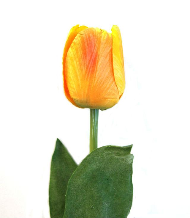 16198_tulipan_orange2NY