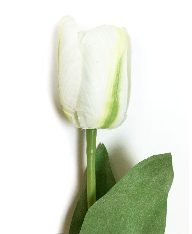 16199_tulipan_hvit1A