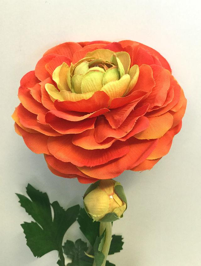 16212_ranunkel_orange1