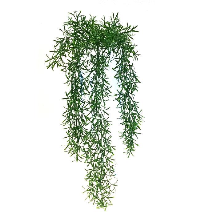 16279_asparagus_hengende1