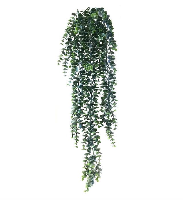 16281_eucalyptus1