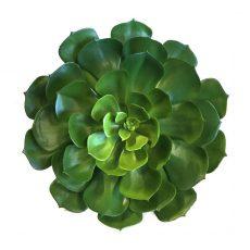 Succulent echeveria rund Ø30xH30cm u/potte