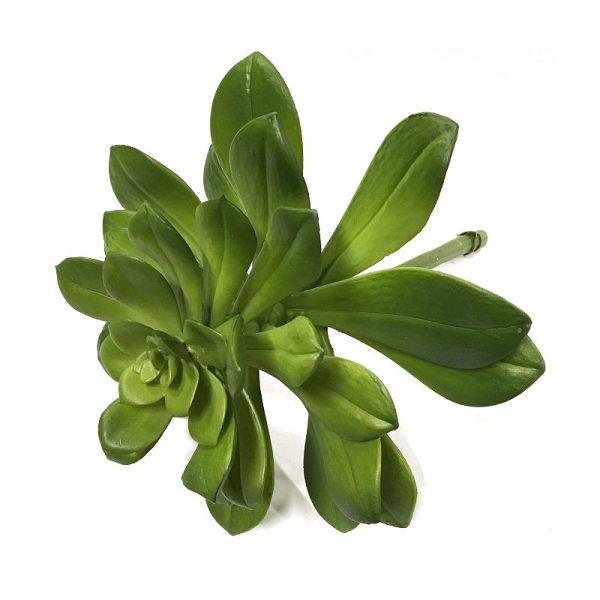 Succulent echeveria Ø20xH25cm u/potte