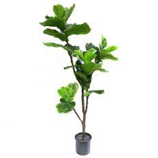 Kunstig fiolfikus plante H120cm