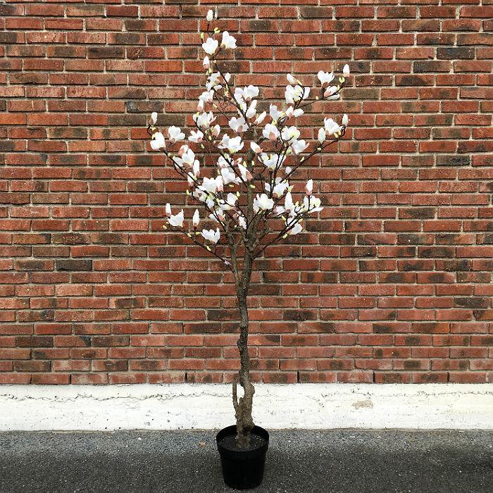 16416_magnoliatre_hvit240_1