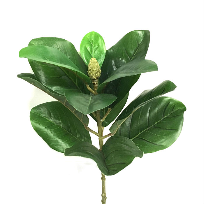 16458_gren_magnoliablad1
