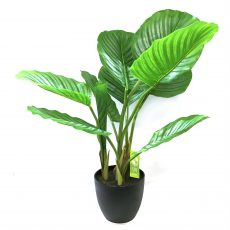 Kunstig calathea plante pearl UV H60cm