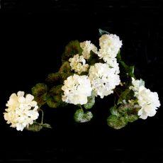 Kunstig pelargonium plante hengende hvit 56cm u/potte *SALG