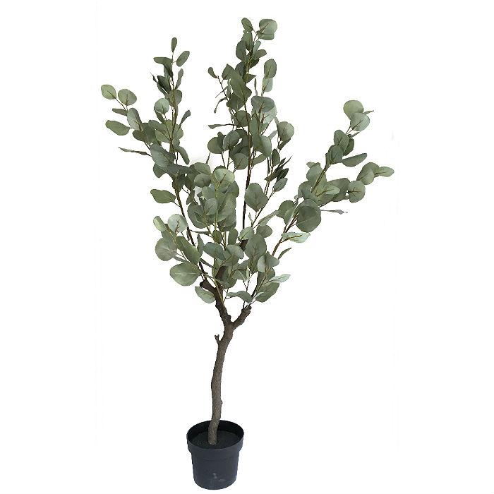 16502_eucalyptustre120cm1