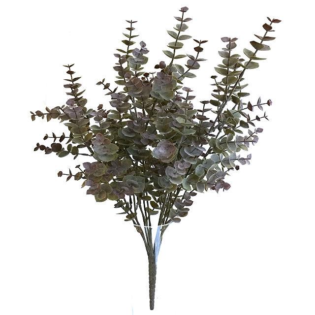 16626_eucalyptus_roed1