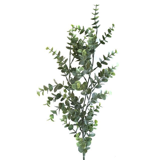 16628_gren_eucalyptusbaby3