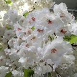 Kunstig kirsebærtre hvit H400cm m/monteringsplate