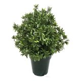 Kunstig rivera busk UV H60cm