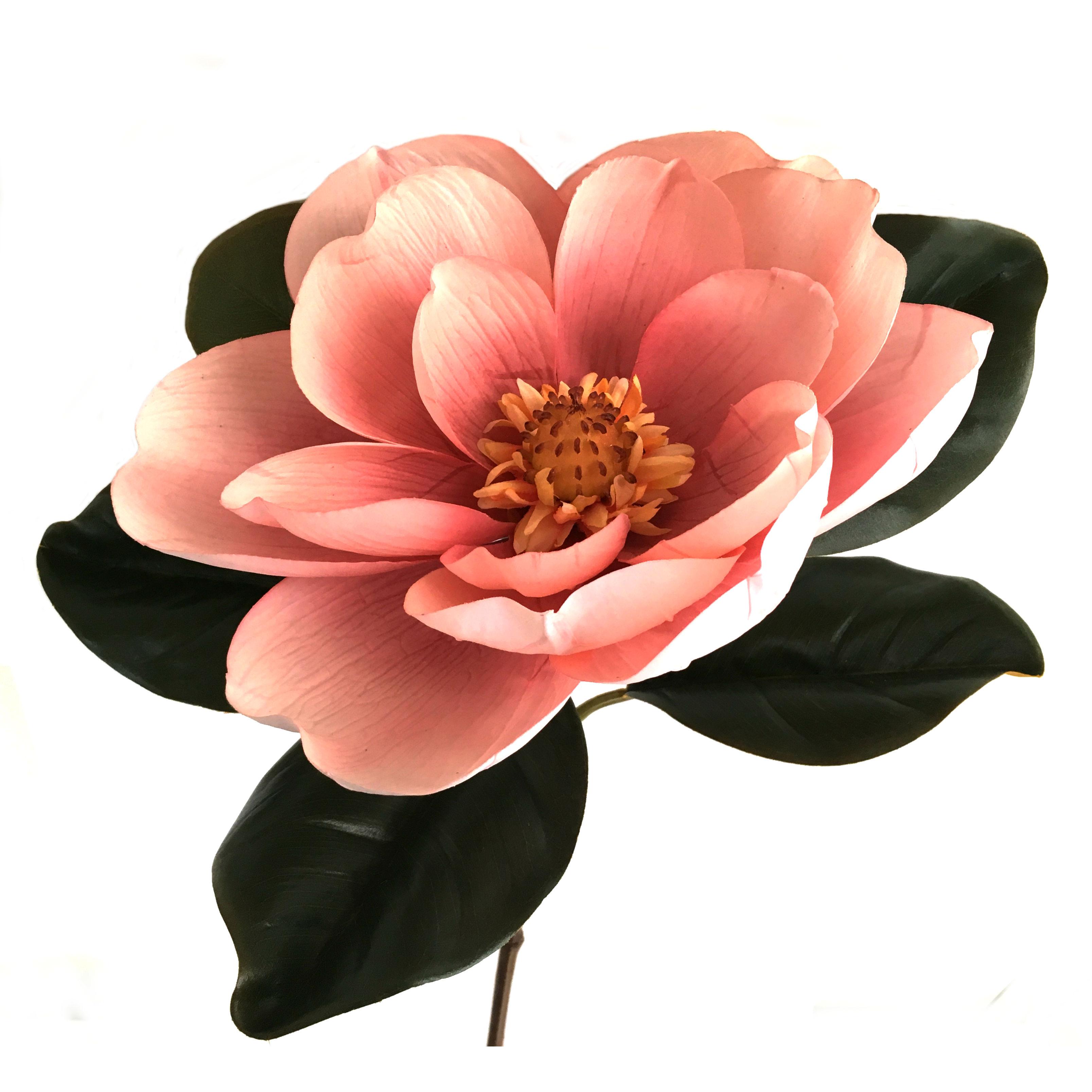16756_magnolia_gigant_lysrosa1