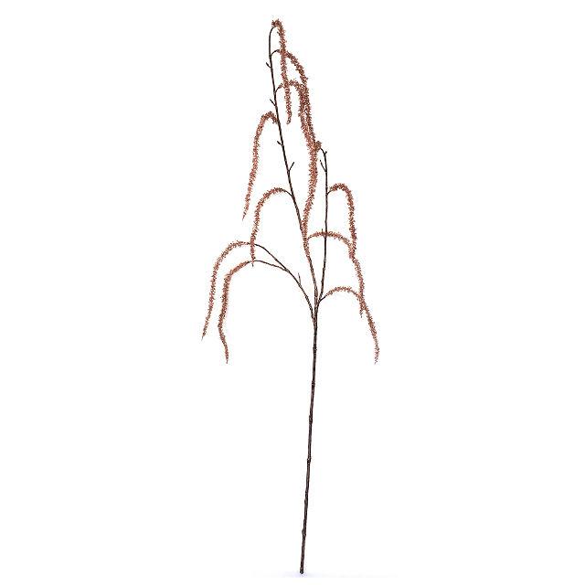 16854_amaranthus1