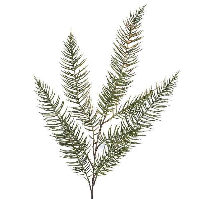 16862_gren_asparagus_gull2