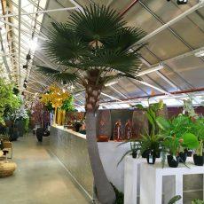 Kunstig palme vifte sving UV H350cm m/monteringsplate