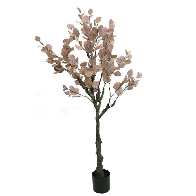 17030_eucalyptustre_rosa140cm1