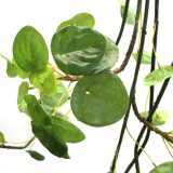 Kunstig peperomia hengeplante L115cm