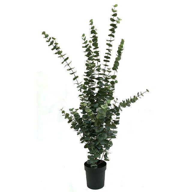 17044_eucalyptusplante160cm1