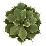 Kunstig succulent kaktus H30xØ30cm