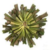 Kunstig succulent echeveria varm Ø28xH28cm m/potte