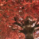Kunstig lønnetre rød H300cm