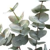 Kunstig eucalyptus gren støvgrønn 100cm