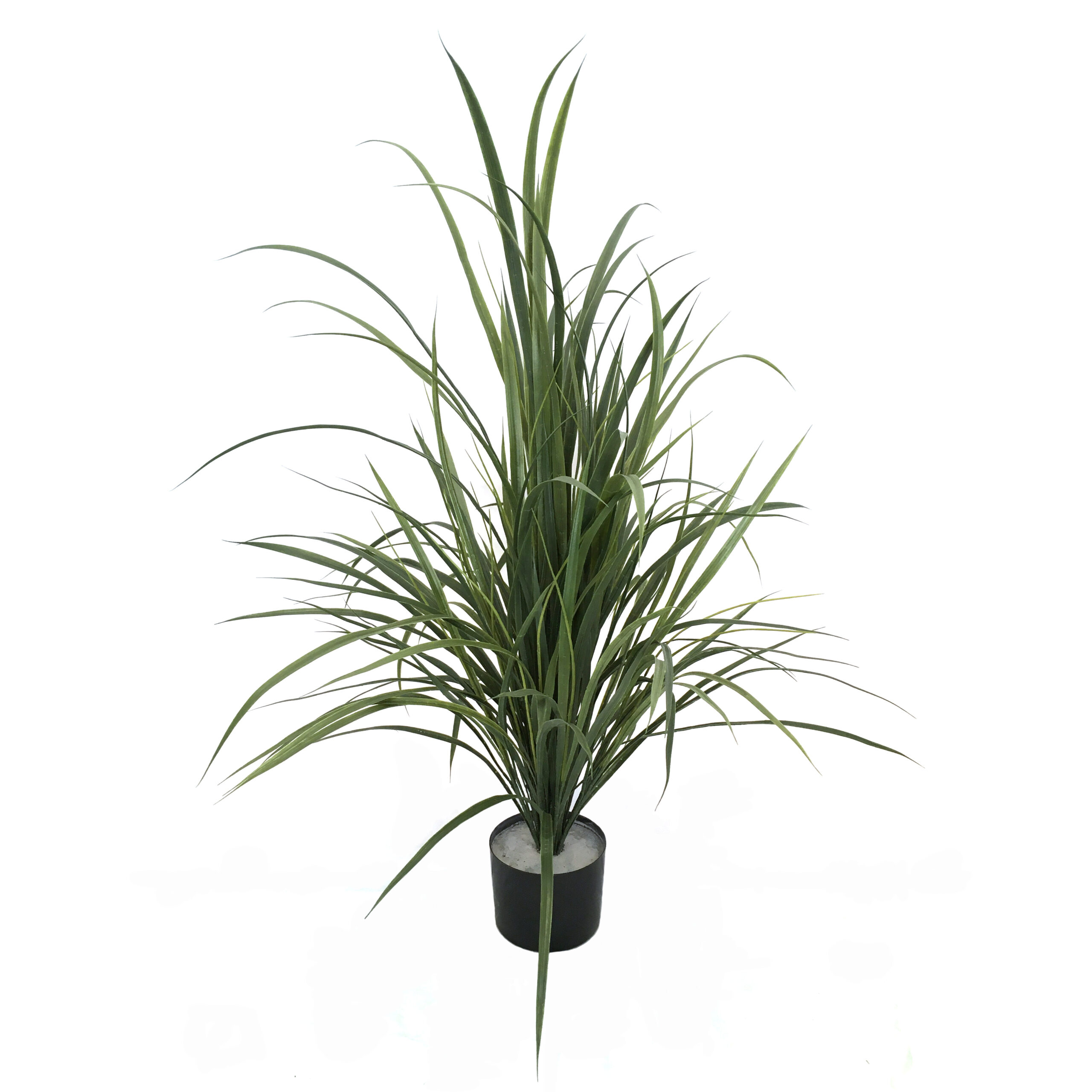 17183_agave_reed105cm1