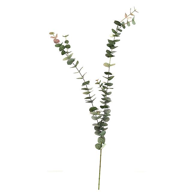 17191_eucalyptus_togren1