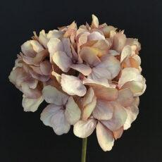 Hortensia dusty peach fersken 48cm