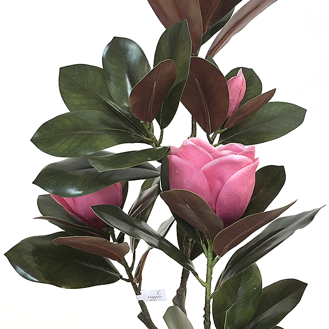 17213_magnoliatre_sunniva_rosa_2NY