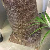 Kunstig palme vifte rett UTE H350cm m/monteringsplate